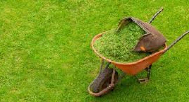Jardines. proyectos y mantenimientos.